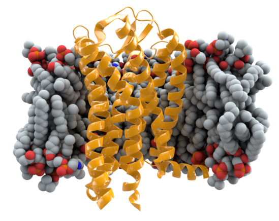 Receptor CCR5.