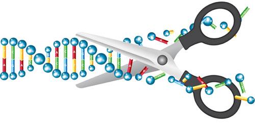 July28_2015_istock_57341840_DNAcutbyScissors_CRISPRtoClinic_GNH1763119518