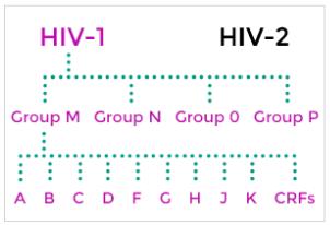 subtipos-de-hiv